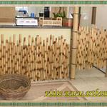 Biombos de bambu cana da índia