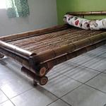 móveis de bambu cana da índia