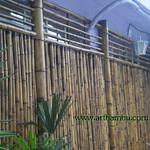 biombo de bambu cana da índia