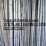 Varas de bambu cana da índia tratada
