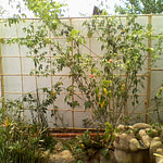 decoração de jardim de inverno