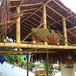 construir com bambu