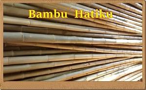 venda de bambu cana da índia tratada