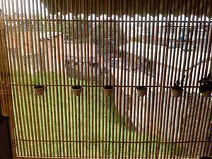 cerca de bambu para casa e jardim